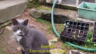 Vídeos de Gatos | Gatos Chistosos | Gatos Graciosos