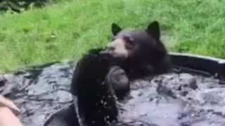 Are you seen cute baby bear bathing and swimming ?