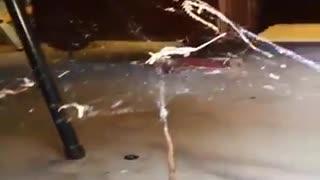 Spider Hunting Snake