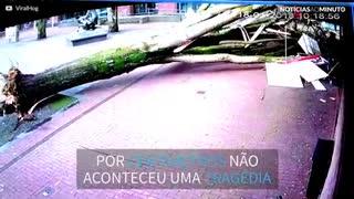 Árvore cai e mulher com bebê escapa por centímetros