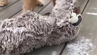 Dog's Favorite Toy Frozen to the Floor