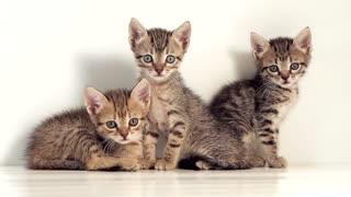 Three Cute kittens Video