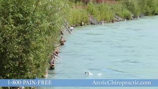 Arctic Chiropractic Summer