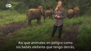 Rescate de bebé elefante