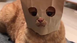 Smart cat mask