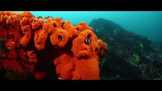 Diving Seal Underwater Animals Scuba Diving New 2021