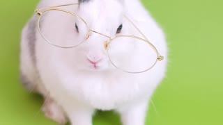 Funny rabbit reading