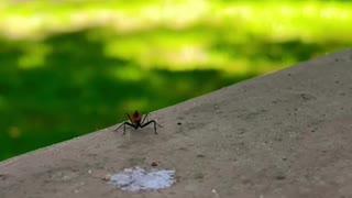 Spider Stroll