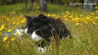 Cute cat living your life