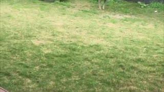 Backyard Roo Shenanigans