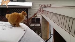 Daily Cat Video from AnimalClipz.