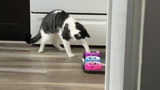 Kitty Eats Like a Raccoon