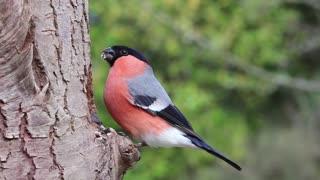 Birds Birds Birds beautiful