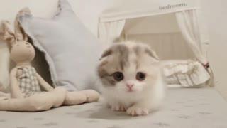 Cute little Baby Puppy Cat