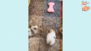 Cute puppies | Funny dog videos
