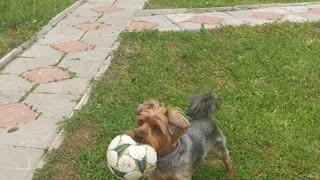 Dog brings the ball