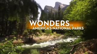 National Parks: Black Bears Up Close