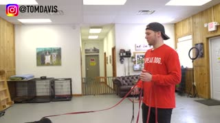 Dog training - What is the difference between shock collar and e collar