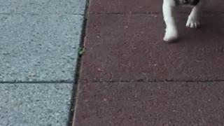 Slow Motion Puppy Cuteness