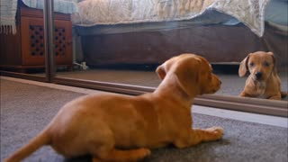The cute dog is afraid of himself