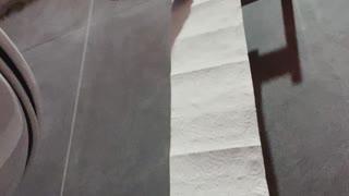 Cats Doing Paperwork