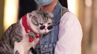 Video CAT!!!!!!!!!!!!!!!!!!!!!!!