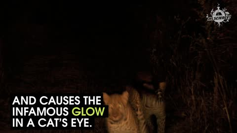 How Do Cats See The World