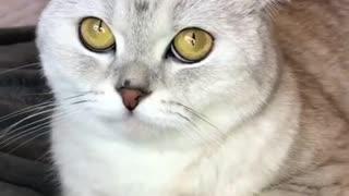 Cat reaction before getting groom