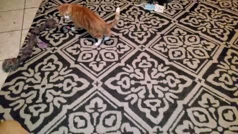 CATCH THAT DOT w/Leo The Cat