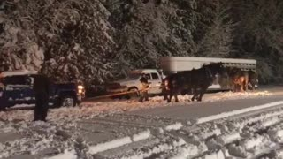 Horses Help Pull Trailer from Snowy Rut