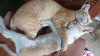 Sleep cats good