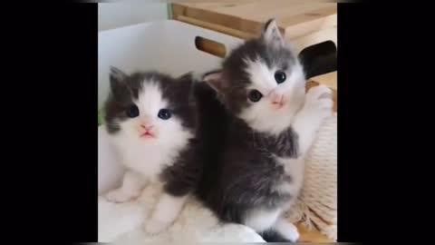 Small beautiful kitten
