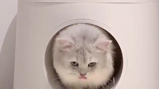 Viral video cat excellent cat video