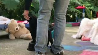 Cute dog training