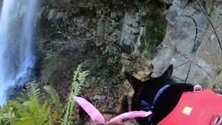 Dog wearing GoPro explores behind beautiful waterfall