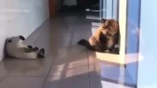 Ninja Cat takes on fat dog
