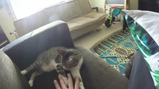 Lila Cat - Time to Inspect Owner Hands