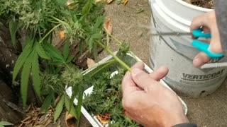 Fall Harvesting