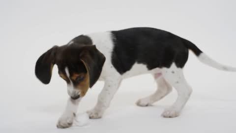 Dog Puppy Pet Playful Animal