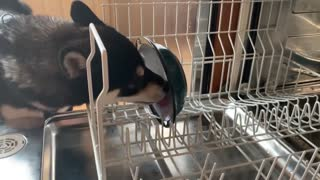 good boy helps with dishes
