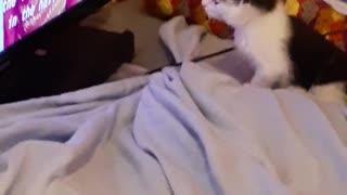 Bo Daisy watching movie.