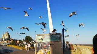 Gabbiani giocano nel vento