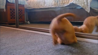Funny Cute Puppy Playing With Mirror