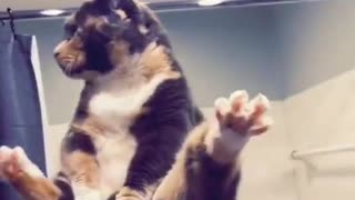 Dude Recreates Classic Animated Moment with Adorable Kitty