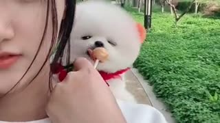 CHINESE COMEDIAN /CHINESE FUNNY VIDEO-2021