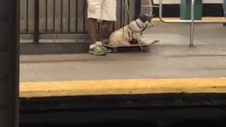 White dog laying down on top of skateboard subway station