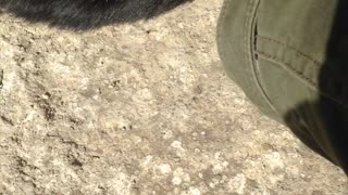 Owner plays with black cat on the ground outside cat has large claws turns away