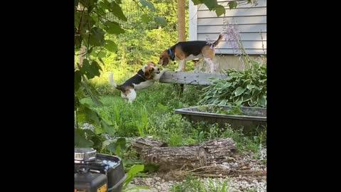 Friendship Beagles