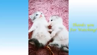Cute Pets And Funny Animals Compilation #4 - Pets Gardn