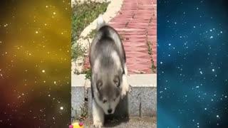 PERRITO TIERNO Y GRACIOSO(ANIMALES)